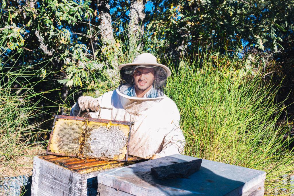 Beekeeper showing a honeycomb
