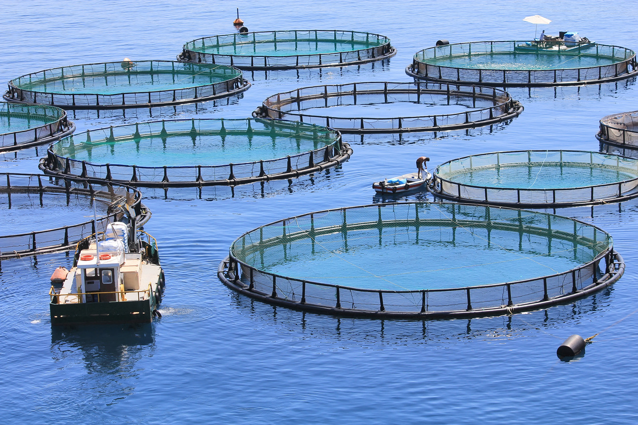 How Fish Farming Is Growing
